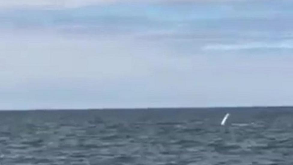 Rare UK sighting of humpback whale