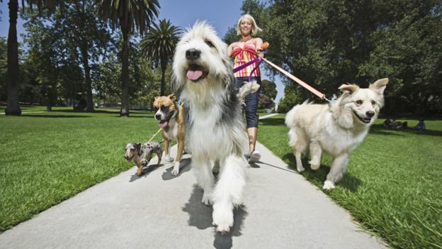 A good dog walker can earn $96,000. (Thinkstock)