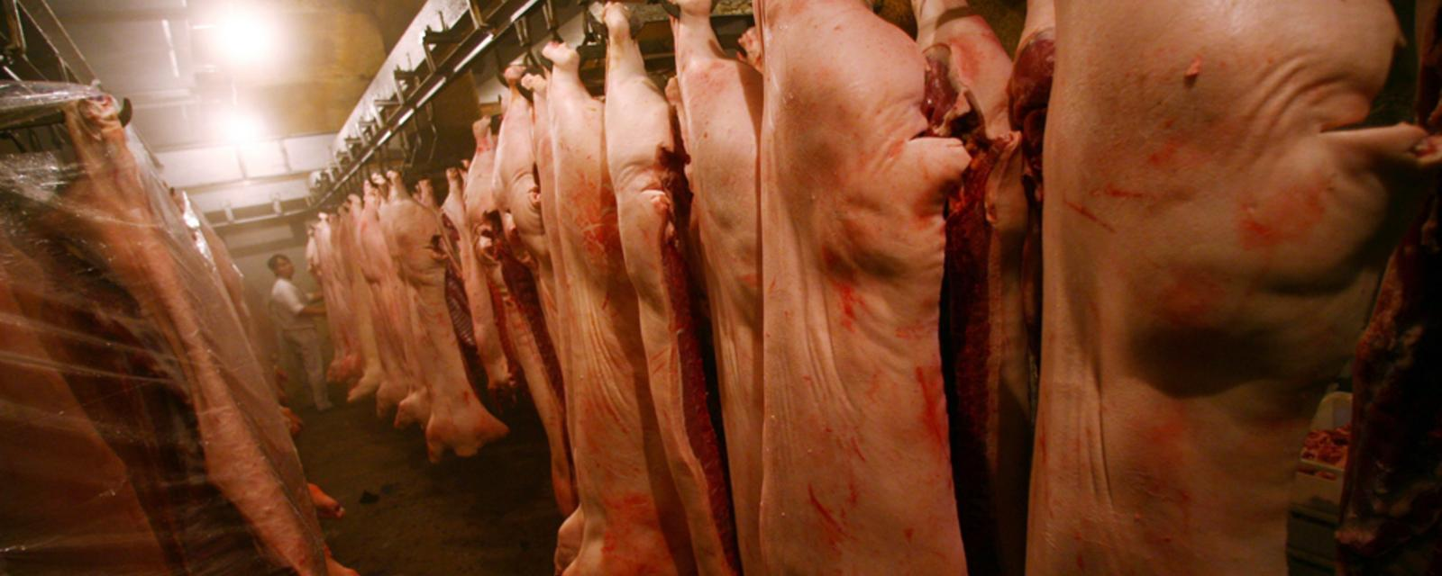 News 2050: All meat sales banned