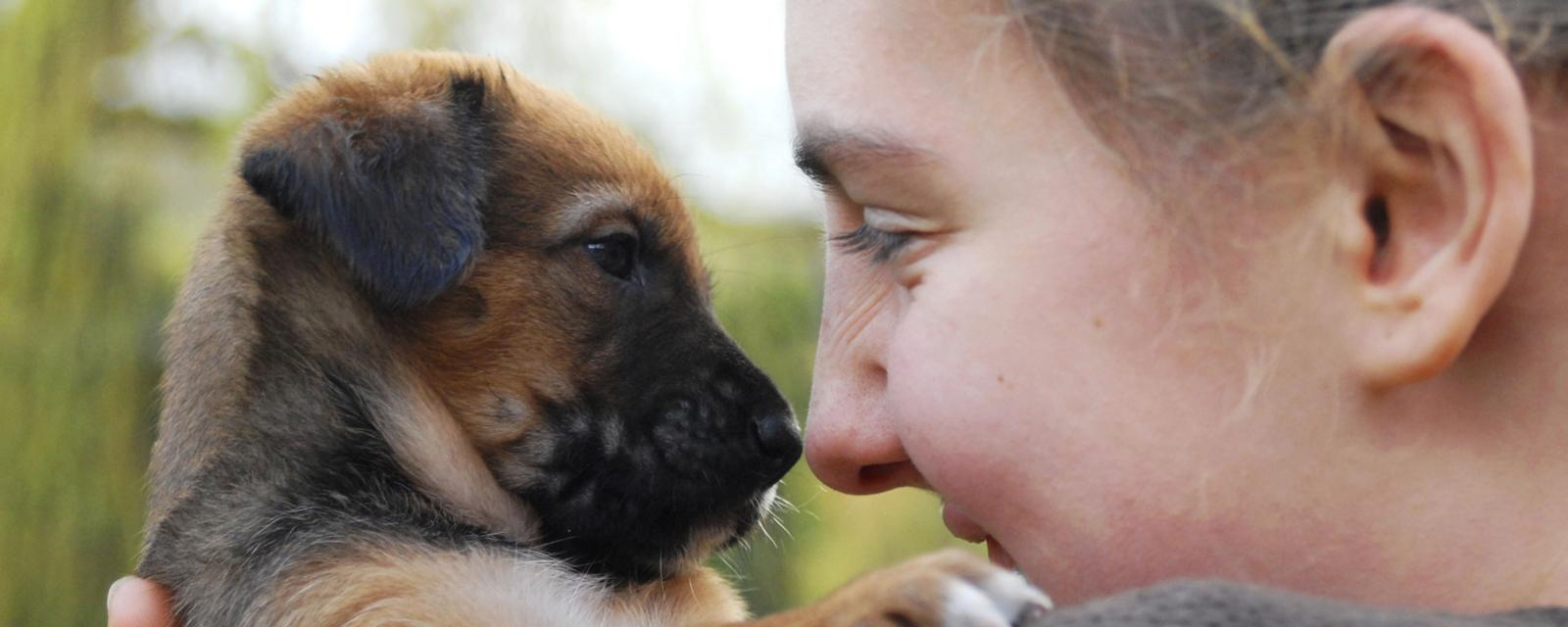 Pet rescue fraud: More common than you may think - BBC Worklife