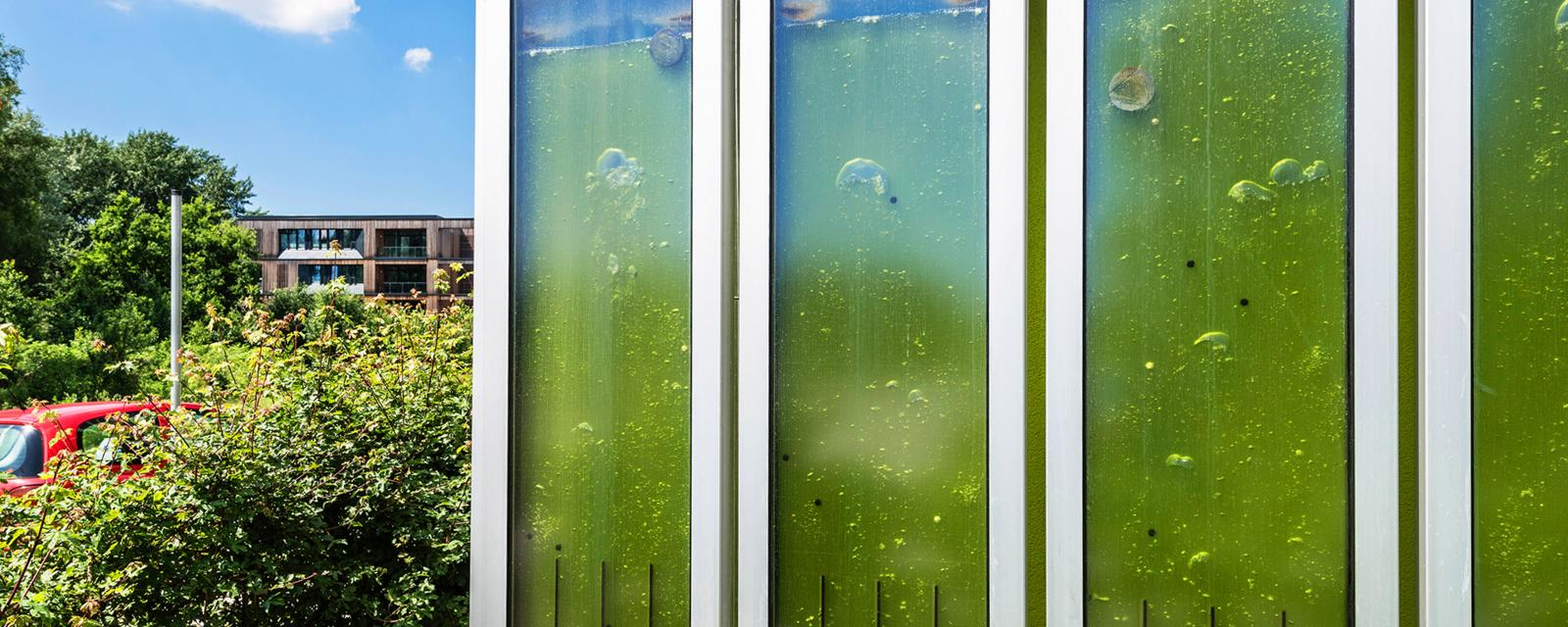 The homes that could be covered in algae