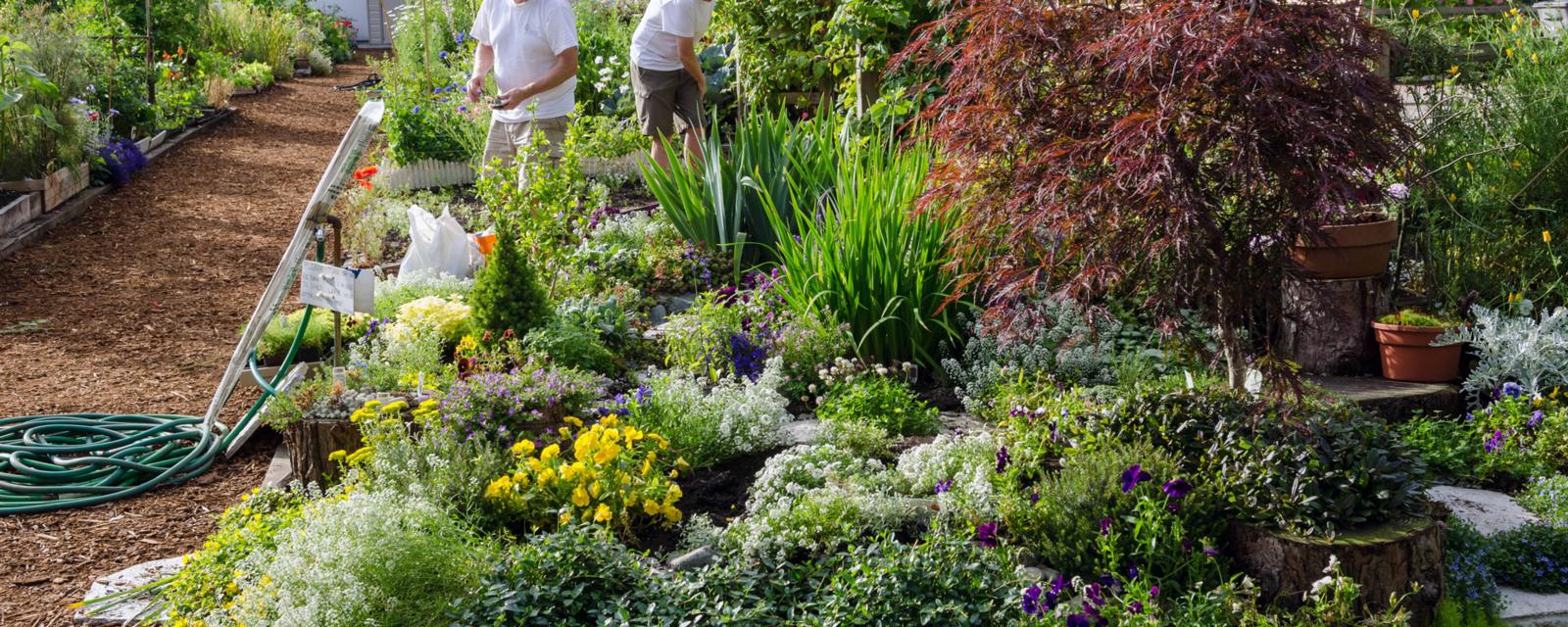 The Brains Secret Gardeners >> Gardening Could Be The Hobby That Helps You Live To 100