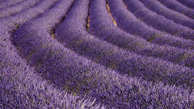 BBC - Travel - Perfume in Provence: Visit, smell, create