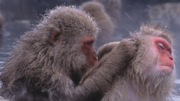 BBC - Future - Why humans and animals rely on social touch