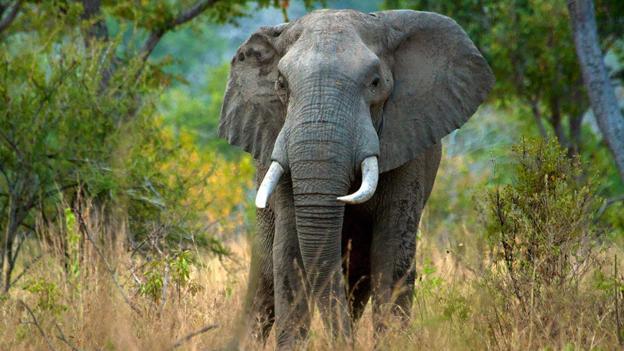 Jumbo-gardeners: How elephants affect weather
