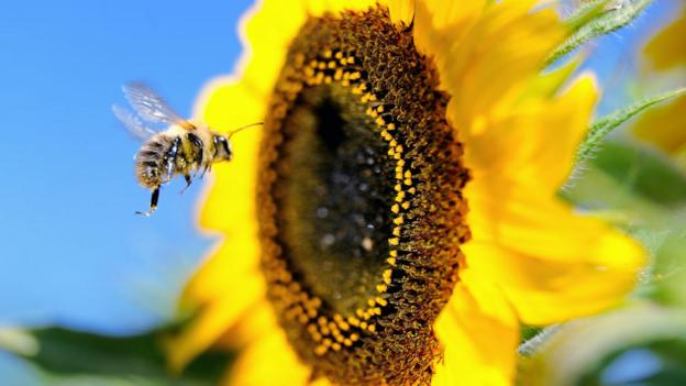 What would happen if bees went extinct?