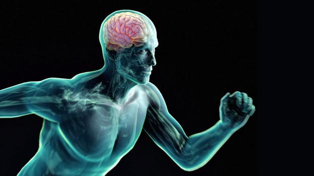 Brain: Why exercise boosts IQ