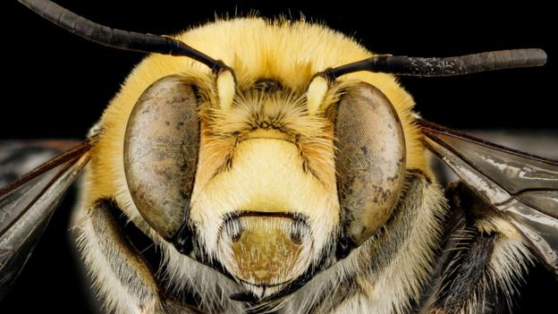 'How a bee sting saved my life'