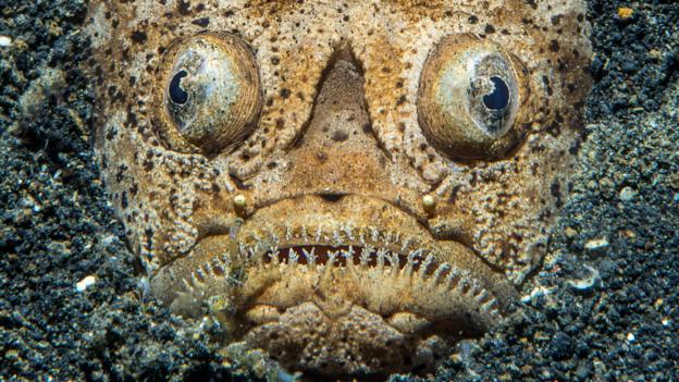 BBC - Earth - Weird and wonderful photo quiz
