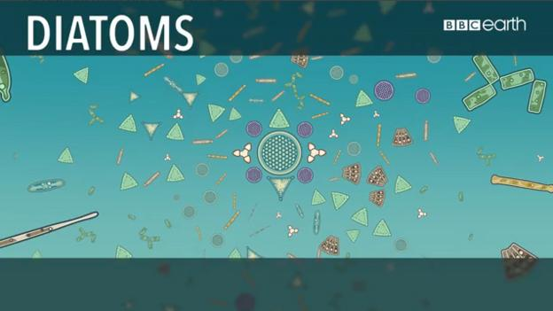Why diatoms are vital to life