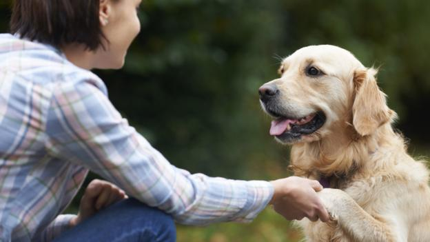 Dogs avoid people who are mean to their owners