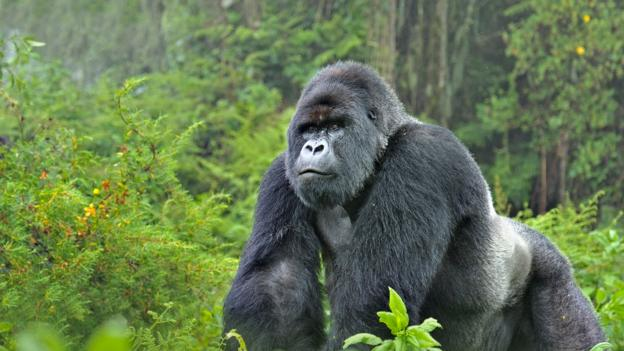What is the point of saving endangered species?