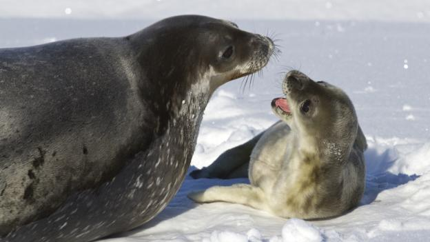 BBC - Earth - 10 astonishing animal parents