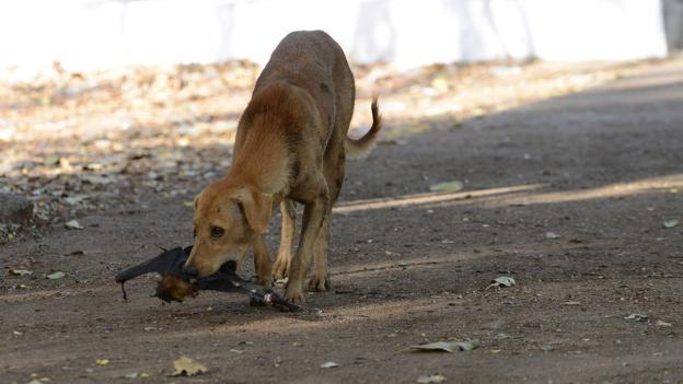 BBC - Future - India's rabid dog problem is running the