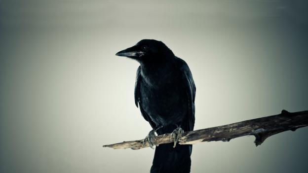 BBC - Earth - The birds that fear death
