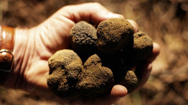 BBC - Future - Why do truffles taste so weird?