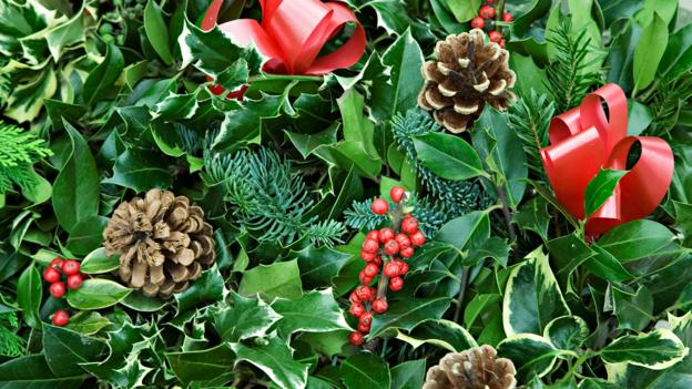 Christmas Holly Tree.Bbc Earth Why We Decorate Our Homes With Holly