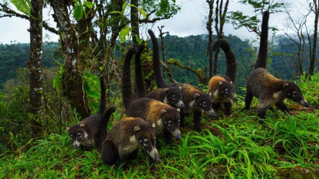Saving the 'wild pets' of Costa Rica