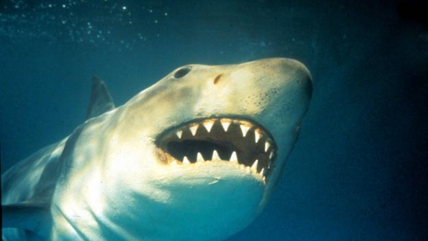 BBC - Culture - The true story of Jaws