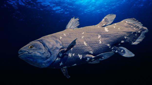BBC - Earth - Sensational coelacanth discovery
