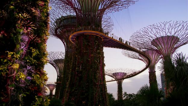 BBC - Earth - Why wild cities are good for our health