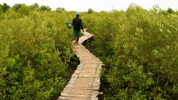 BBC - Travel - The trees keeping Vietnam afloat