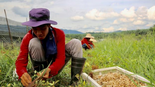 Are forgotten crops the future of food?