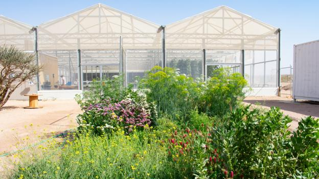 Magnificent Bbc Future How To Use Seawater To Grow Food In The Desert Home Interior And Landscaping Oversignezvosmurscom