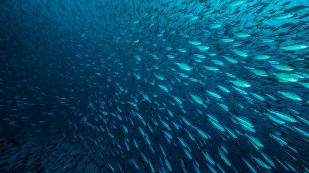 BBC - Future - How to make sure the fish we eat is safe