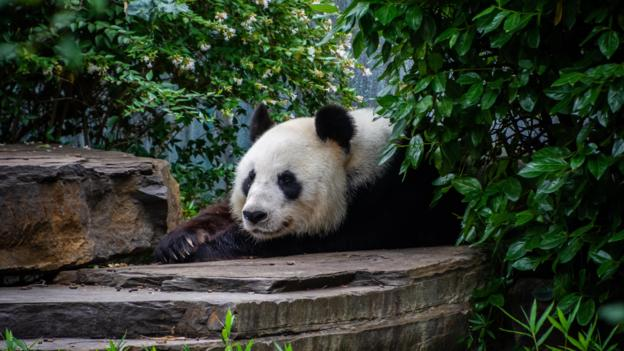 Why paying for pandas is not so black and white