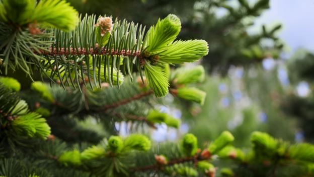 The Alaska town where money grows on trees