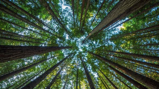 What would happen if all the world's trees disappeared?