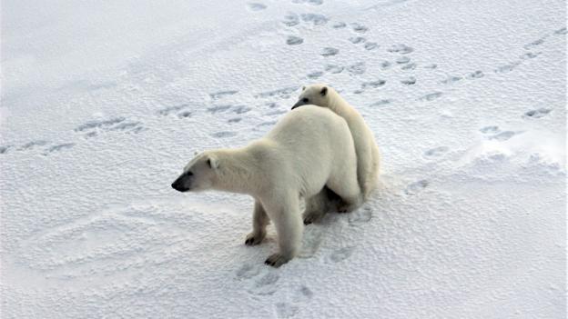 The icy camp where polar bears roam