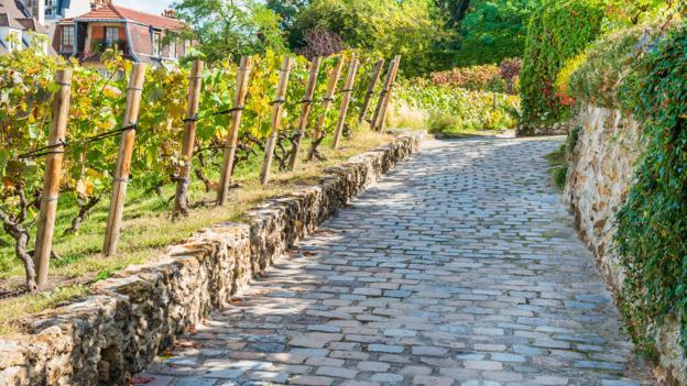 Paris' hidden vineyards