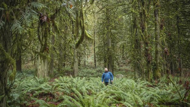 The ancient Japanese practice of forest bathing