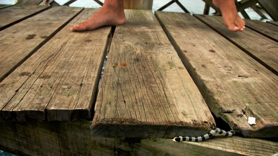Surprise underfoot