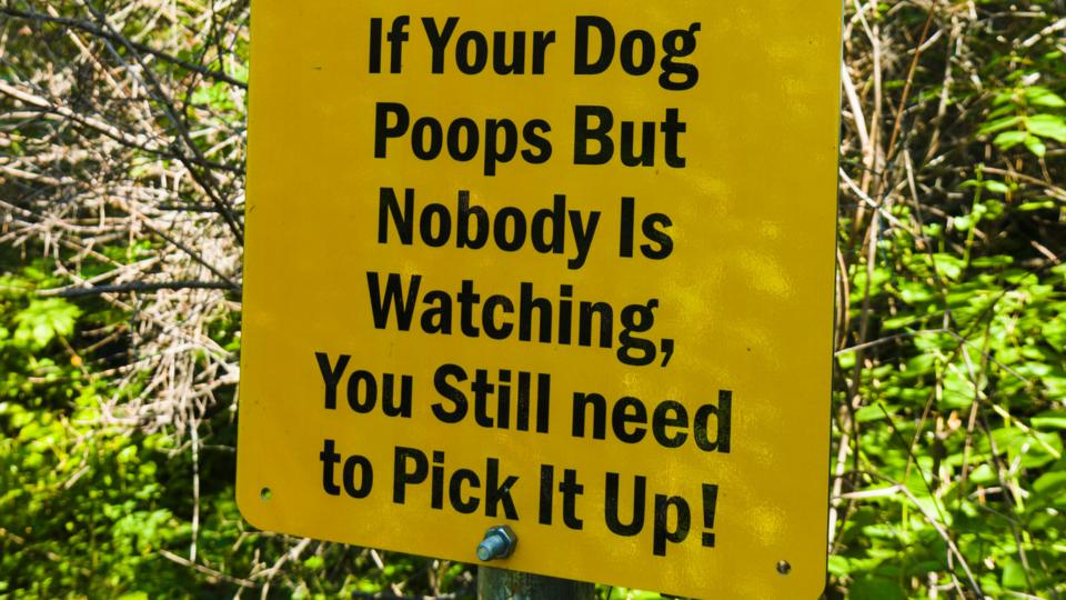 There are people making millions from your pet's poo - BBC