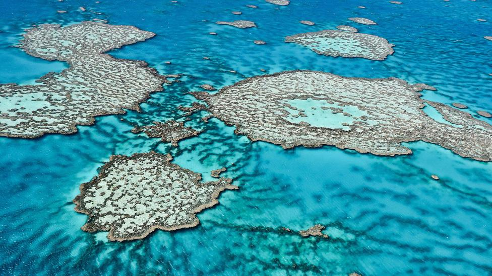 Growing acidification – thanks to the amount of carbon in the atmosphere – could drastically affect the corals which form reefs like the Great Barrier Reef. (Getty Images/AFP)