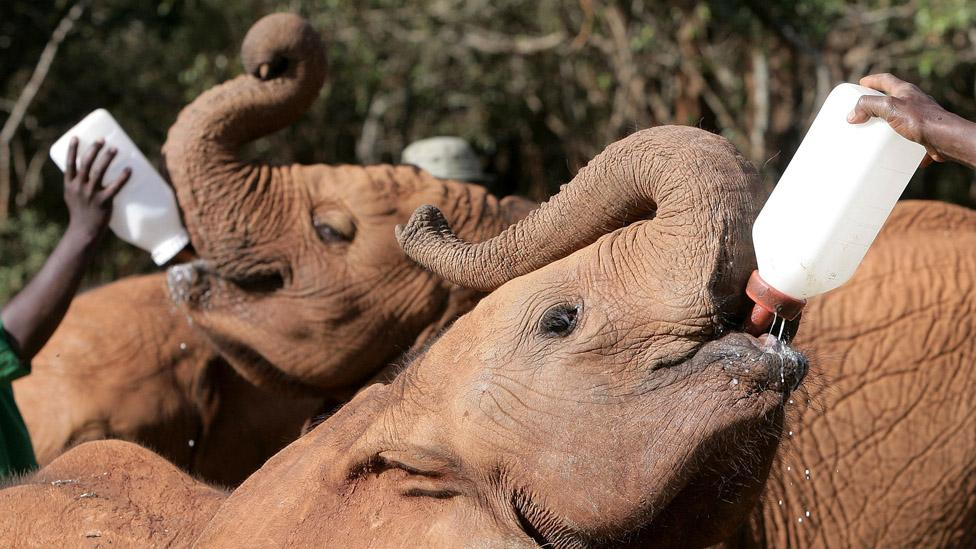 If you have a few free hours, visit an elephant orphanage. (Rosie Hallam/Getty Images)