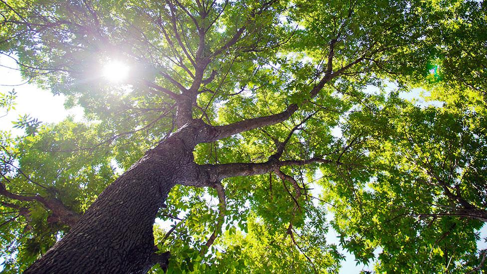New York is expected to gain more than a million new trees in the next few years (Getty Images)