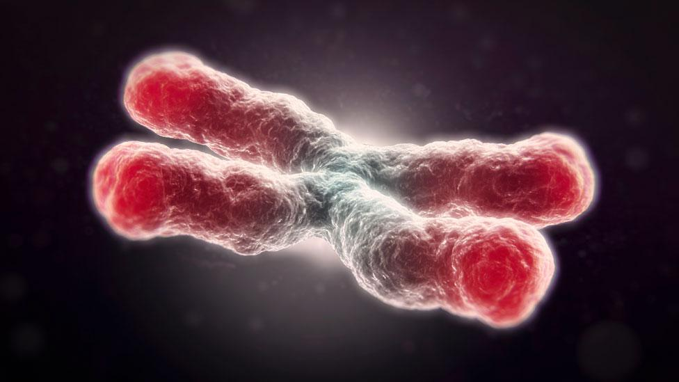 Telomeres, the protective ends of chromosomes, are linked to ageing of cells (Science Photo Library)