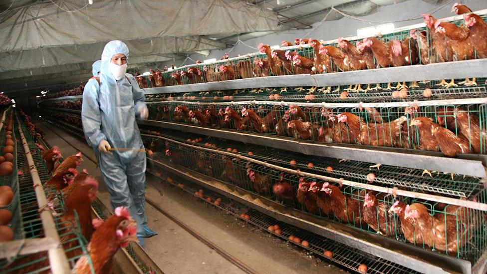 ...our treatment of animals as a source of food? (Getty Images)