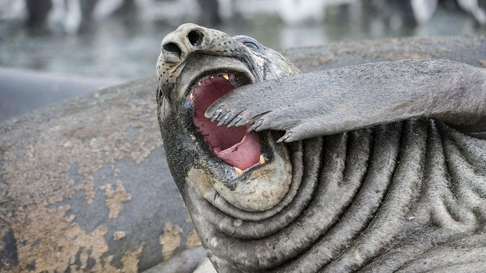 Yawning is common throughout the animal kingdom, yet we still don't know what purpose it serves (Science Photo Library)
