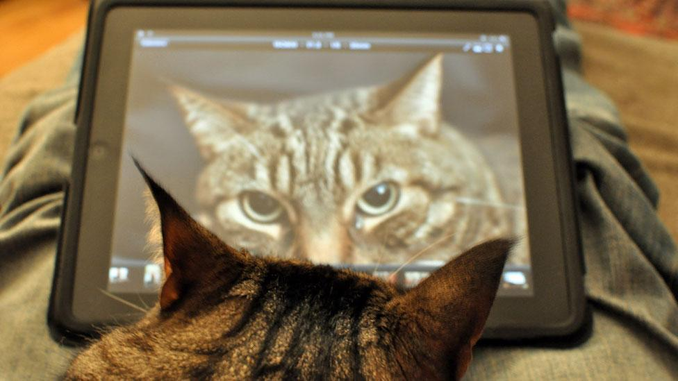 The bright graphics of a tablet capture the attention of many animals, cats included (Steve Lyon/Flickr/CC BY-SA)