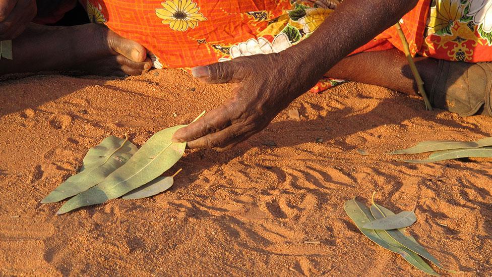 A Western Desert story-teller uses leaves as part of the narrative (Jennifer Green)
