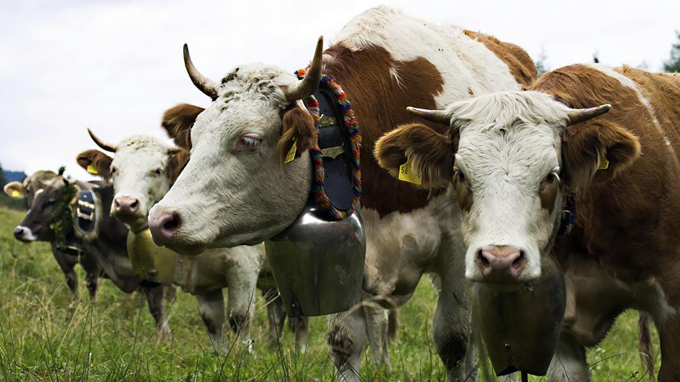 As populations rise, growing cattle to feed them creates more strain on resources (Getty Images)