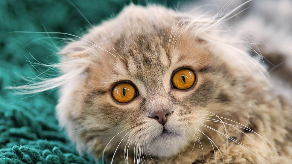 Three ways cats can control our minds - BBC Future