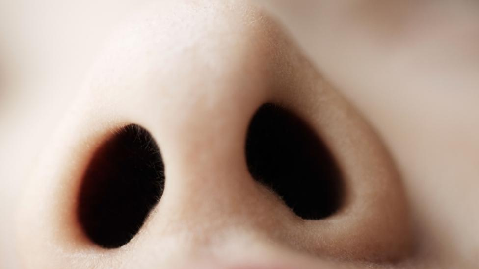Your sense of smell reveals more about your world than you think (Credit: Getty Images)