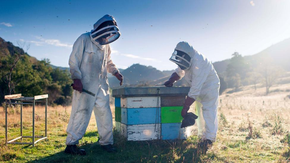 Manuka honey suppliers are struggling to keep up with demand. (Credit: Comvita NZ Ltd)