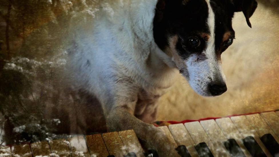 Laurie Anderson's Heart of a Dog (Credit: film still)